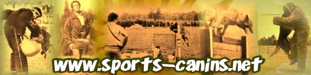 photos sports canins